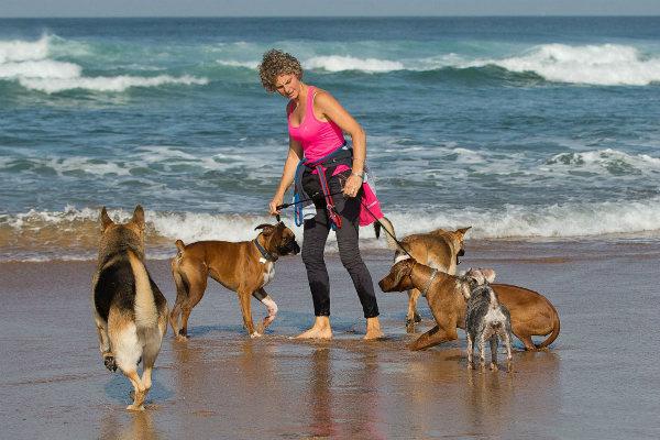 выгул собак на пляже за деньги
