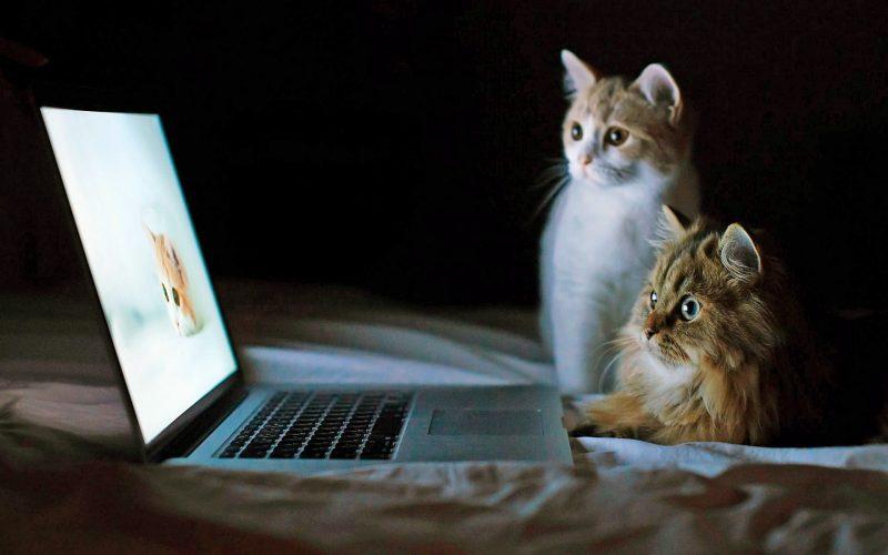 Коты с ноутбуком